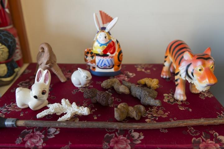 家中的许多物件都是罗小虎旅行中的偶遇,比如这些哺乳动物的粪便化石