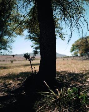让-吕克·米蓝 《2005年4月、5月,#319》190×153厘米 彩色照片 2005年
