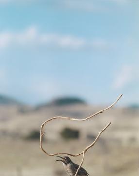让-吕克·米蓝 《2007年2月、3月、4月,#524》228×183厘米 彩色照片 2007年