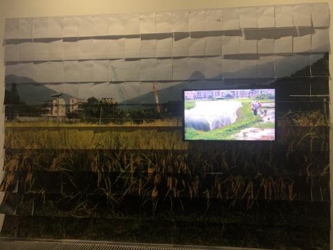 《寂静春天来临前 - 序曲》,劳丽丽,高清录像装置(纸本摄影、防虫网、竹、农作物、酵母、微生物),高清录像4分16秒,2010-2019
