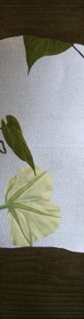 《夕顔》 作品分类/Categories:版画/Aquatint艺术家/Artist:宫山广明/Hiroaki Miyayama 版数/Edition:A.P. 尺寸/Size:31×60cm 年代/Year:1997-2006