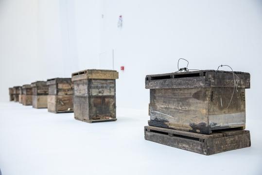 蒋竹韵 《蜂巢:展期内不完全进程显示》 蜂巢、蜂蜜 2020