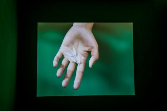 马海蛟在疫情期间创作的双屏影像《如果把绿色删除,如果开始关心植物》