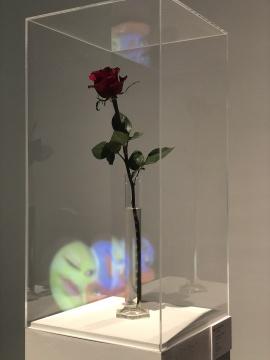 约瑟夫·博伊斯(德国)《为了爱而生存》  量杯、玫瑰 尺寸可变1975