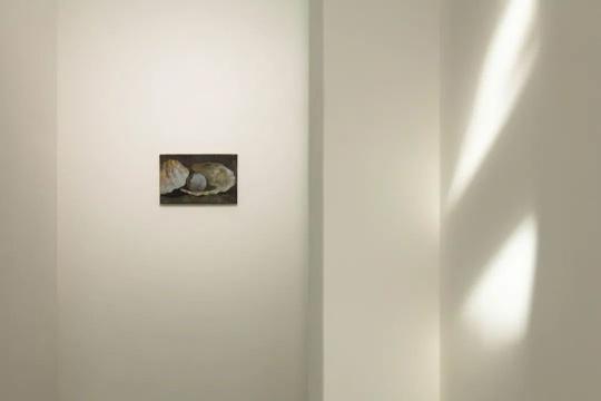 《贝》40x27cm 布面油画 2017