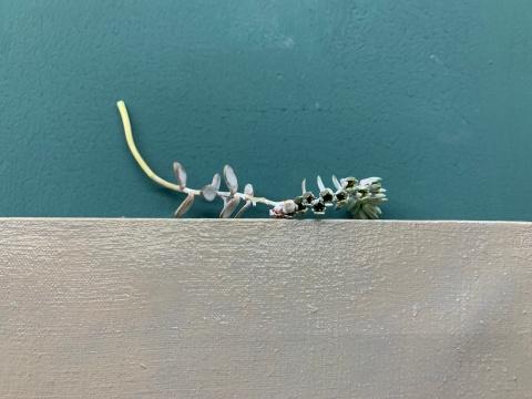 """作品顶端放置的植物,与艺术家""""静物化""""的创作相呼应"""