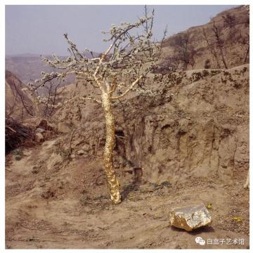 靳勒《贴金-李子树》行为艺术2005
