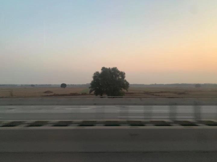 2019行车途中,窗外原野上的一棵树