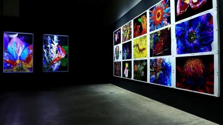 """2020年5月,""""荒木经惟·花幽""""展览现场"""