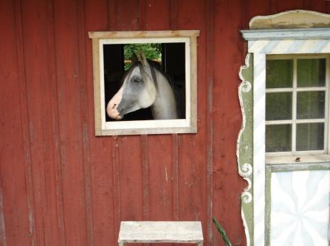 北岛 《窗口》 (图片由艺术家提供)