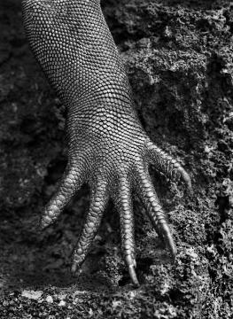 塞巴斯提奥·萨尔加多 《海鬣蜥的爪子》 收藏级艺术微喷 2004(图片由成都当代影像馆提供)
